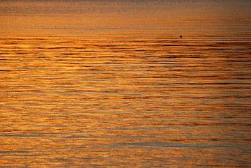 Gouden zee van