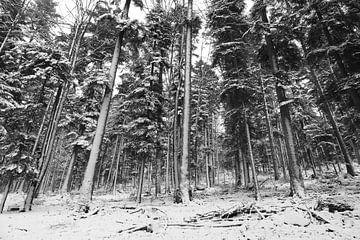 Winterlandschaft in den französischen Vogesen von GoWildGoNaturepictures