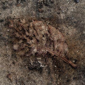 Herfstblad  van Marcel Waterman