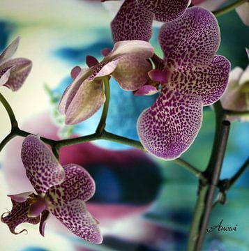 Orchidee sur Iwona Sdunek alias ANOWI