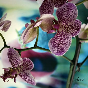 Orchidee von Iwona Sdunek alias ANOWI