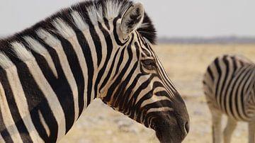 Zebra van Erna Haarsma-Hoogterp