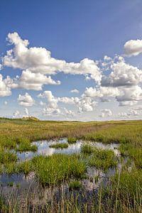 Texel duinlandschap / Texel dune landscape van