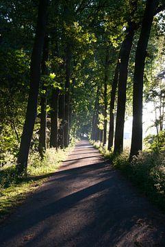 Zonsopkomst in stadspark Culemborg van Milou Oomens