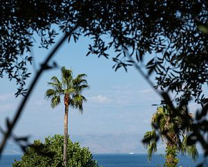 doorkijkje palmboom van Nienke Stegeman