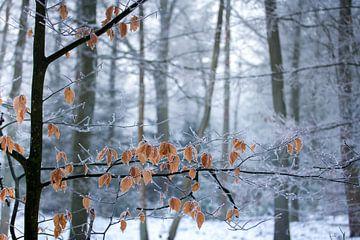 Blätter im Winterwald von Karijn Seldam