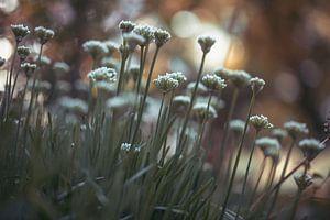 fleurs partie 179 sur Tania Perneel