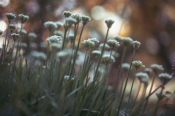 Blumen Teil 179