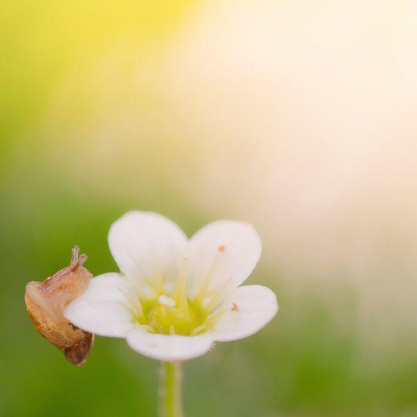 Little Snail on a flower van Foto NVS