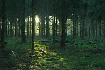 Groen bos in de ondergaande zon. sur Yorrit v.d.Kaa