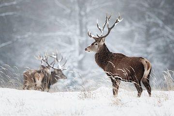 Herten in de sneeuw van Daniela Beyer