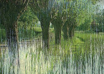 Wilgen in de lentezon van Anita Snik-Broeken
