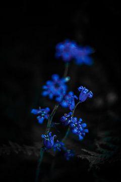 wilde bloemen sur Anne-Fleur Eggengoor