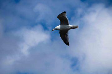 vogel in de lucht van Noa Koorn