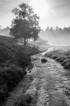 Heideweg von Koen Boelrijk
