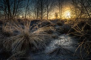 Wierdense veld zonsopkomst winter van
