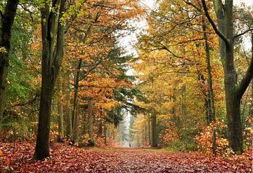 Der Herbstspaziergang von Corinne Welp