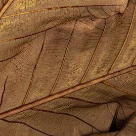 Detail reuzenblad van Carla van Zomeren