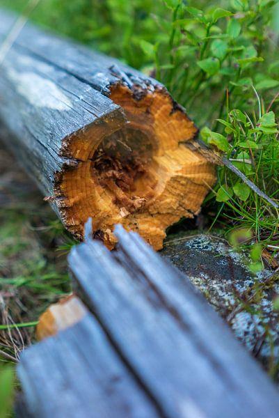 Broken wood van Arkadiusz Kurnicki