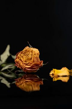 Stilleven gele verlepte roos van Gaby Hendriksz