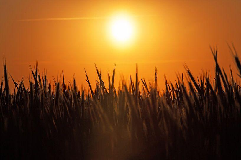Coucher de soleil sur le champ sur Frank Herrmann