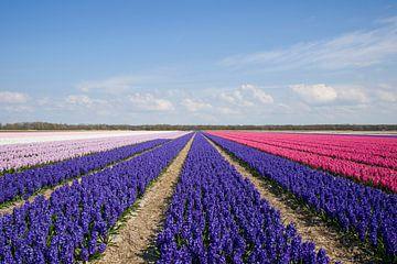 Bloeiende hyacinten van Barbara Brolsma