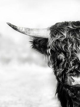 Halb Highlander, in schwarz und weiß von Joey Hohage