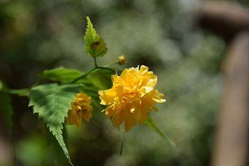 Gelbe Blume von Justin Reddering