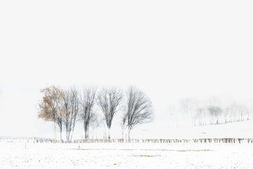 Winterse Bomen van
