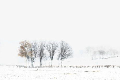 Winterse Bomen sur