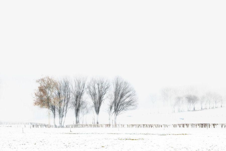 Winterse Bomen sur Vandain Fotografie