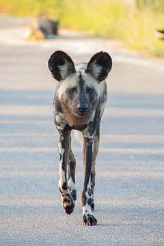 Wilde hond V van Marijke Arends-Meiring