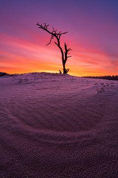 Einsamer toter Baum von Rick Kloekke