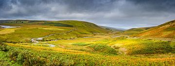 Patchwork von Gräsern und Moosen, Hügel Landschaft Wales von Rietje Bulthuis