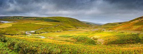 Lappendeken van grassen en mossen, heuvellandschap Wales