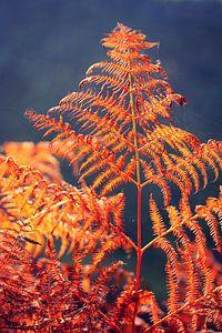 golden season... fern