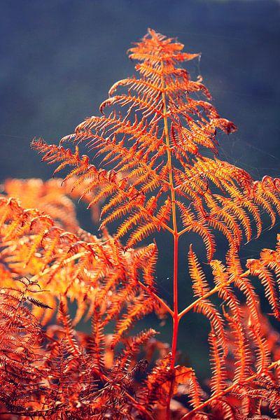 golden season... fern van Els Fonteine