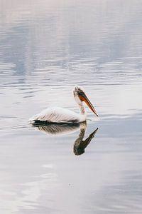 Reflectie pelikaan