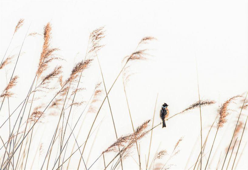 Eine einsame Fahne im Schilf von René van Leeuwen