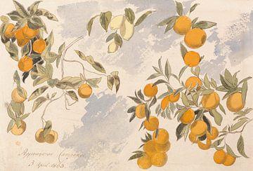 Edward Lear~Bäume mit Früchten, 3. April 1863