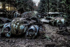 VW Kevers in het bos