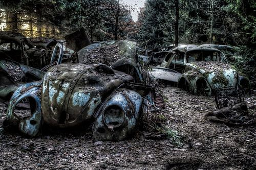 VW Kevers in het bos van Eus Driessen