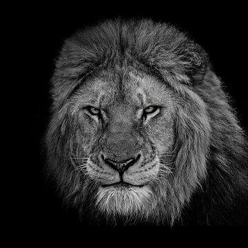 De koning, Sayyed Nayyer Reza