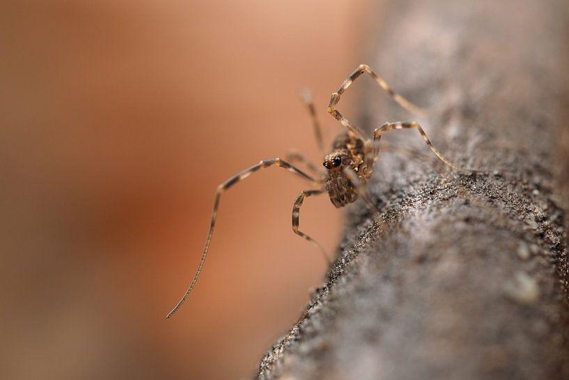Spinne in Bewegung von Astrid Brouwers