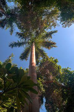 Aswan botanische tuin van Maarten Verhees