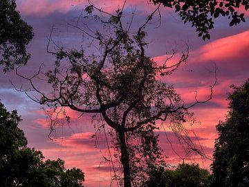 Een Twilight in de Jungle rondom de Rinjani vulkaan op Lombok Indonesië van Rik Pijnenburg
