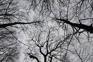 Hoge bomen in herfst