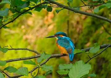 IJsvogel in schaduw sur Remco Van Daalen