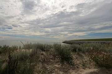 Waddenzee Ameland van