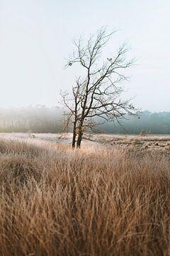 Die Natur trägt immer die Farben des Geistes von Maikel Claassen Fotografie
